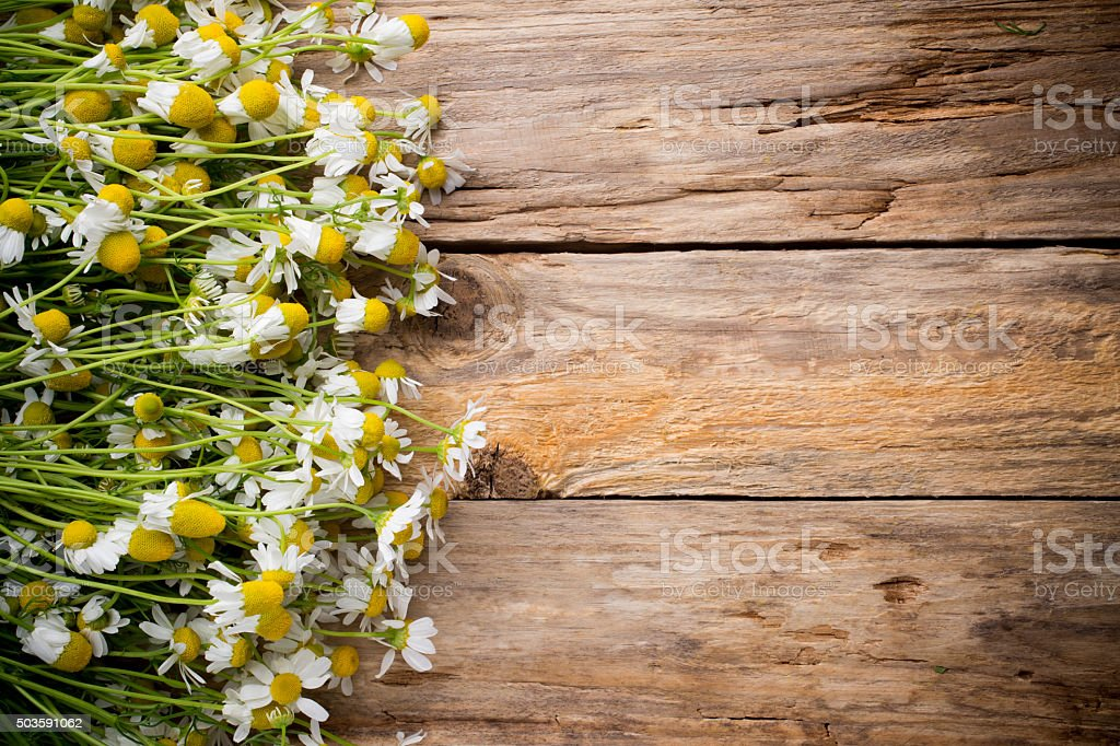 Chamomile. stock photo