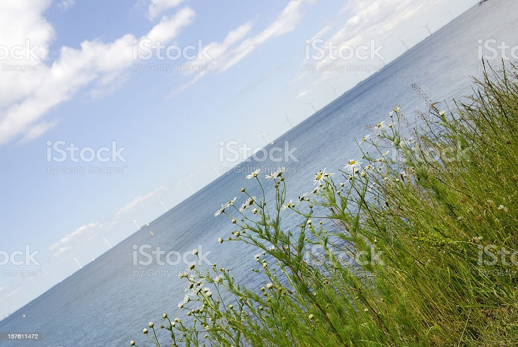 Chamomile Plants, ocean and wind turbines royalty-free stock photo