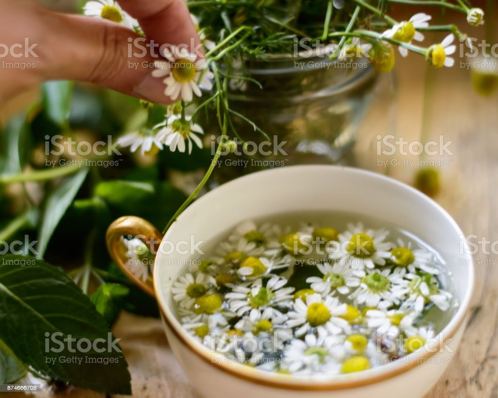 Chamomile Tea (Matricaria Recutita) stock photo