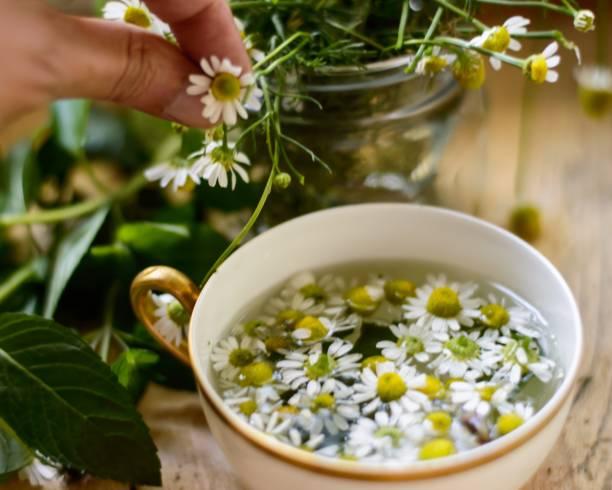 Chamomile Tea (Matricaria Recutita) stock photo
