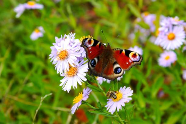 Chamomiles daisies macro in summer spring field and beautiful eye picture id1063449248?b=1&k=6&m=1063449248&s=612x612&w=0&h=c11r3cirngpzgny5jflv8e0vqfzqg lbaadqjtvm9zc=