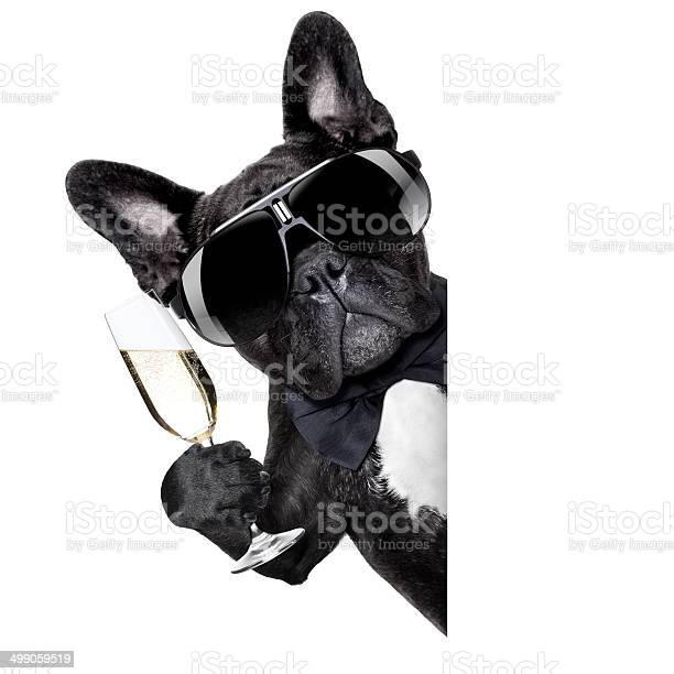 Champagne dog picture id499059519?b=1&k=6&m=499059519&s=612x612&h=zmozr1gtfrnlpcj6u3jliaseo0uzvxwo6l3lxn8k ee=