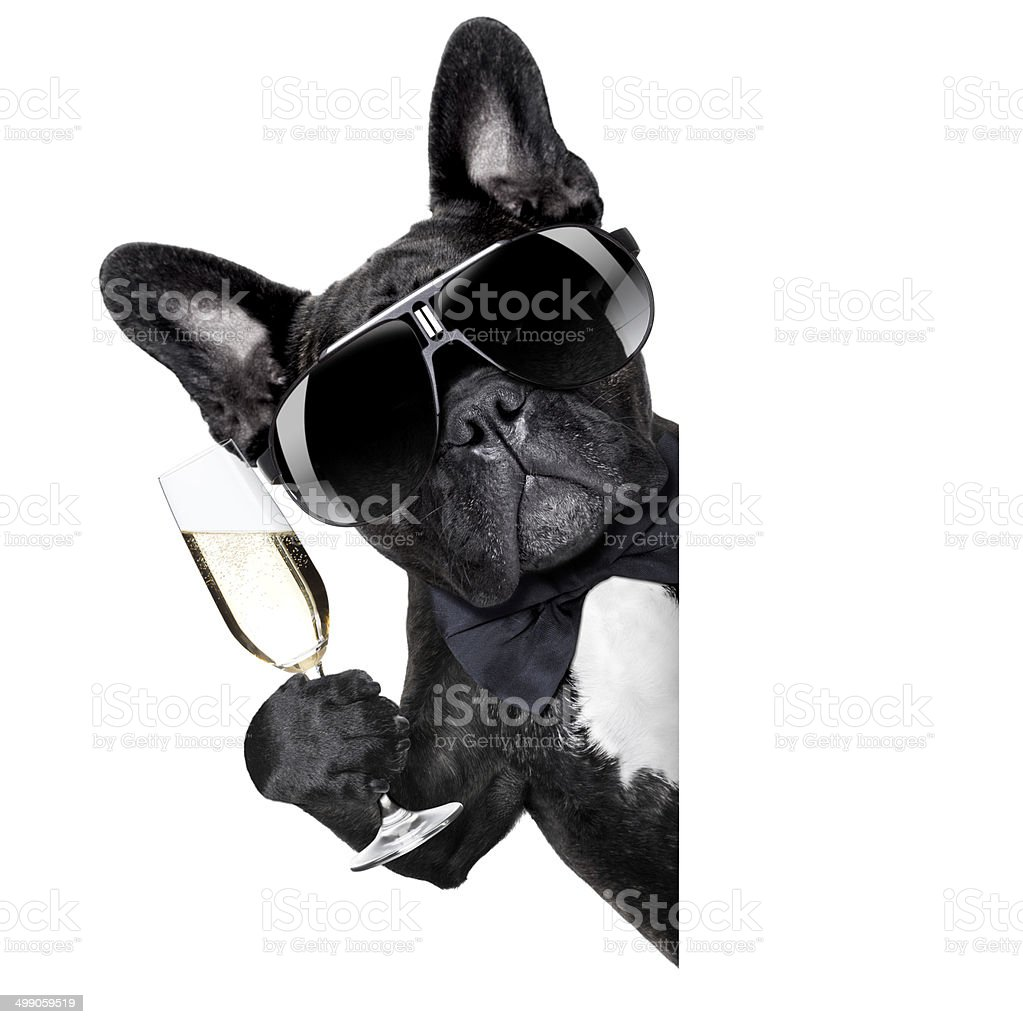 champagne dog stock photo