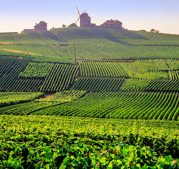 champagne A view over the  champagne vineyards of verzelay epernay champagne ardennes france epernay stock pictures, royalty-free photos & images
