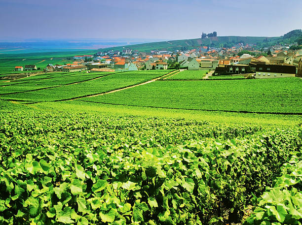 champagne a view over champagne vineyards towrads the town of epernay, champagne region, france epernay stock pictures, royalty-free photos & images