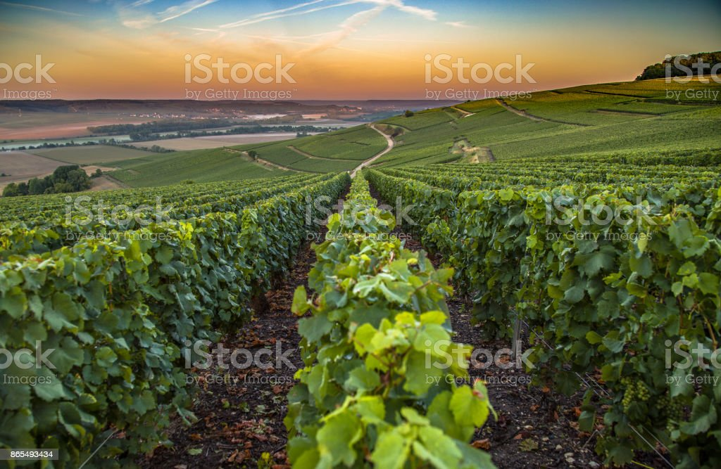 Champagne region in France. A beautiful view. stock photo