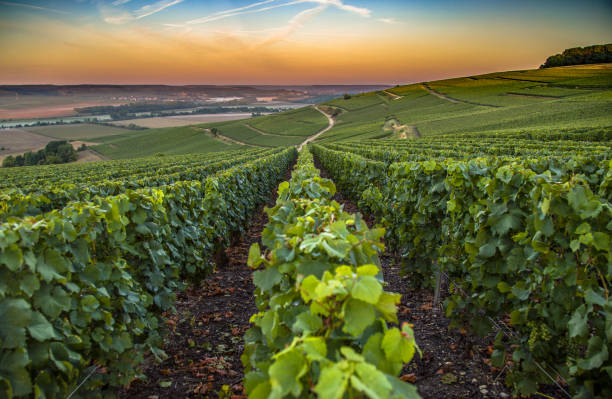 champagne region in france. a beautiful view. - champagne stock pictures, royalty-free photos & images