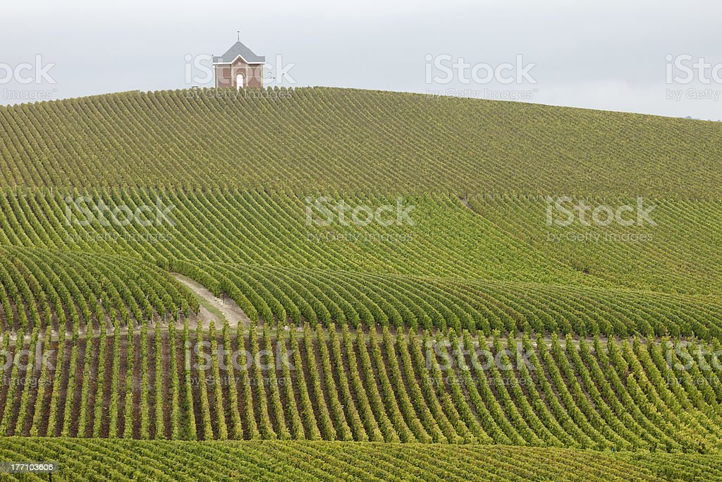 Champagne Vineyard royalty-free stock photo