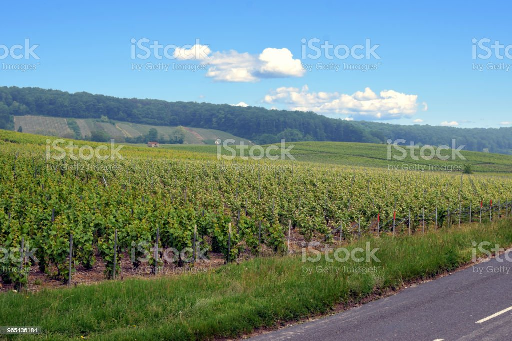 Champagne vineyard royalty-free stock photo