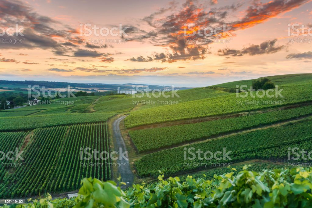 Champagne Vineyards at sunset Montagne de Reims, France stock photo