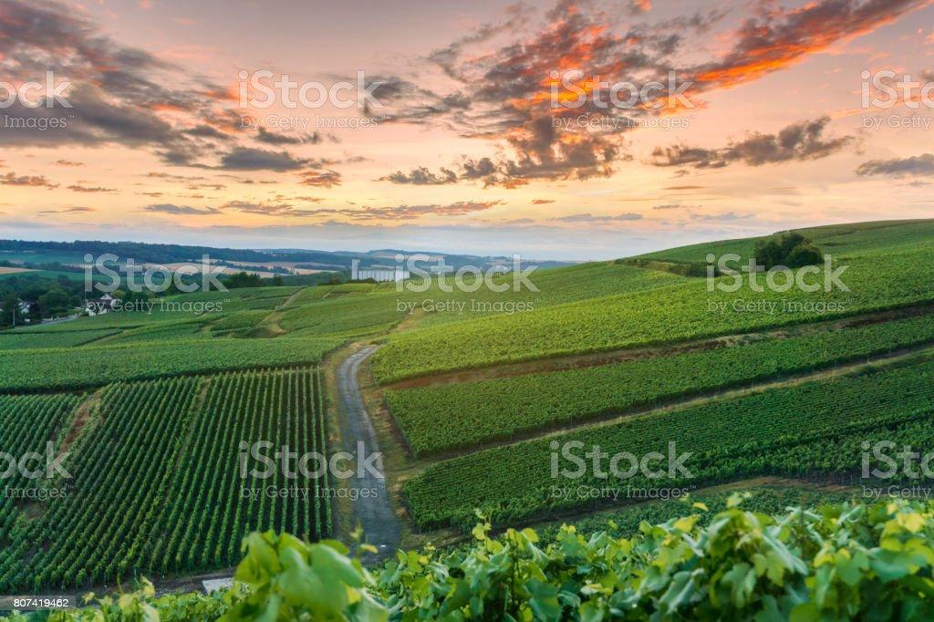 Vignobles de Champagne au coucher du soleil Montagne de Reims, France - Photo