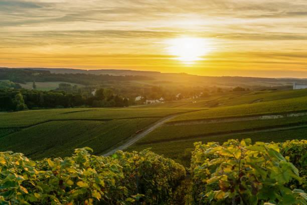 champagner weinberge bei sonnenuntergang montagne de reims - bordeaux wein stock-fotos und bilder