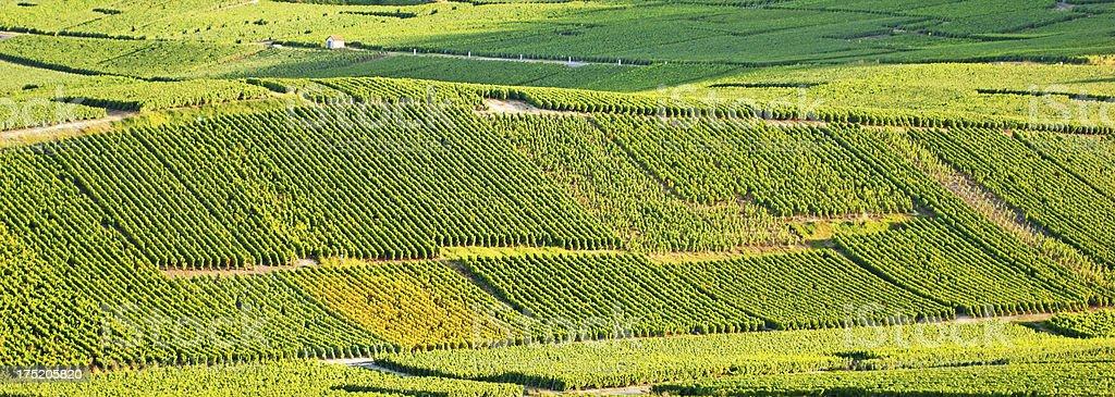 Vignobles de Cramant, Champagne - Photo
