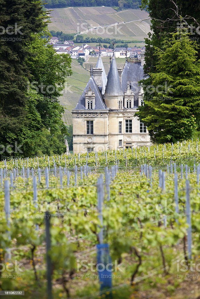 Champagne Vineyards Marne Valley stock photo