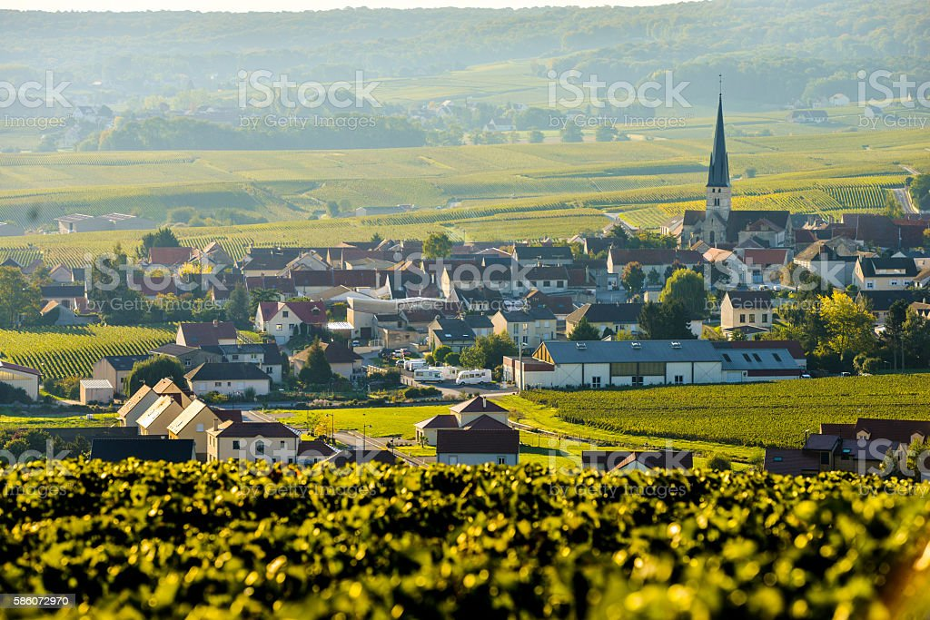 Champagne vineyards Sermiers in Marne department, France - Photo