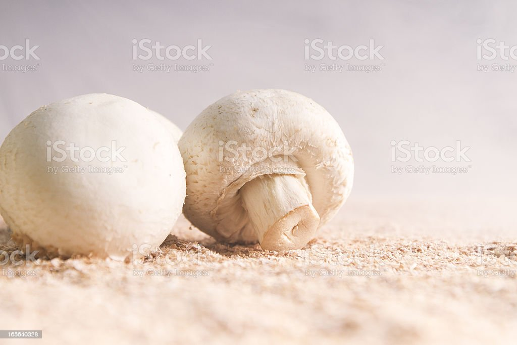 Champignon Mushrooms royalty-free stock photo