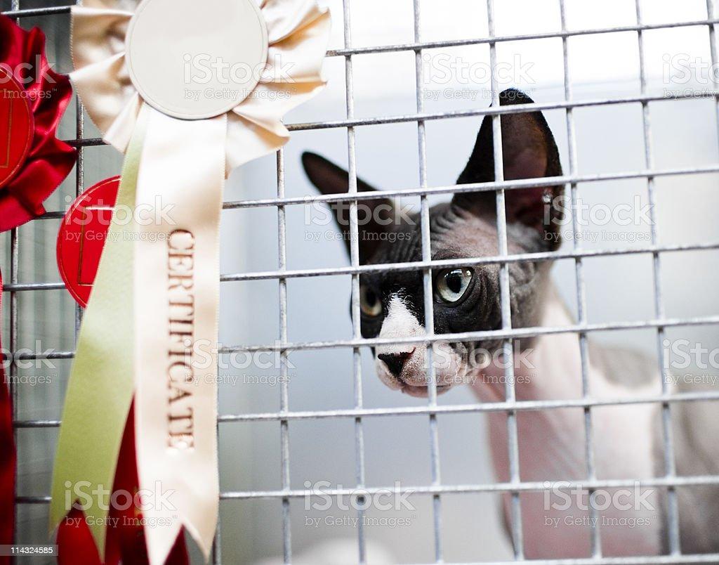 Champion cat stock photo