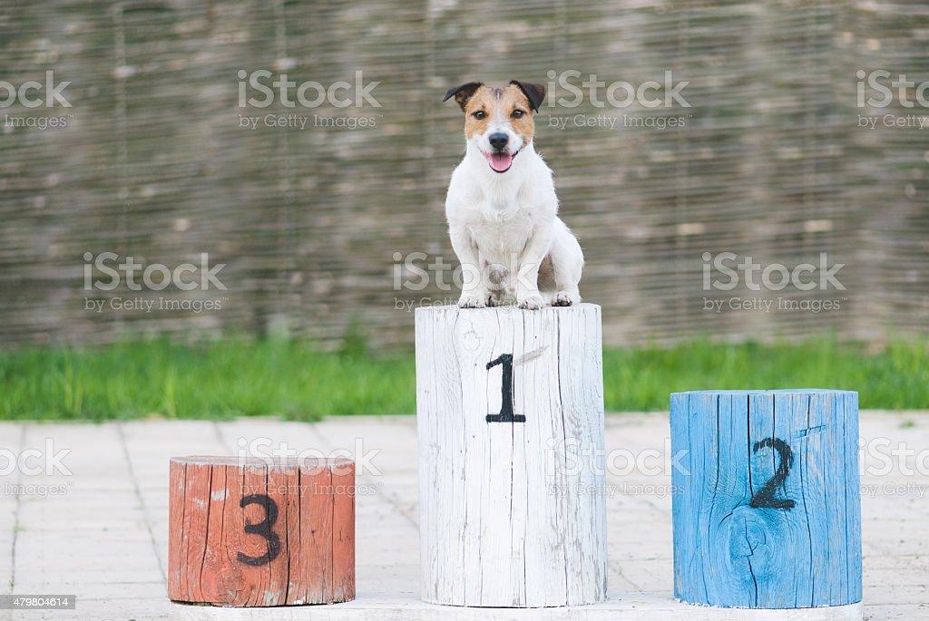 Champion dog on a pedestal stock photo