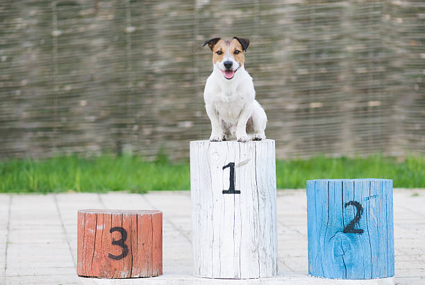 Champion dog on a pedestal stock photo