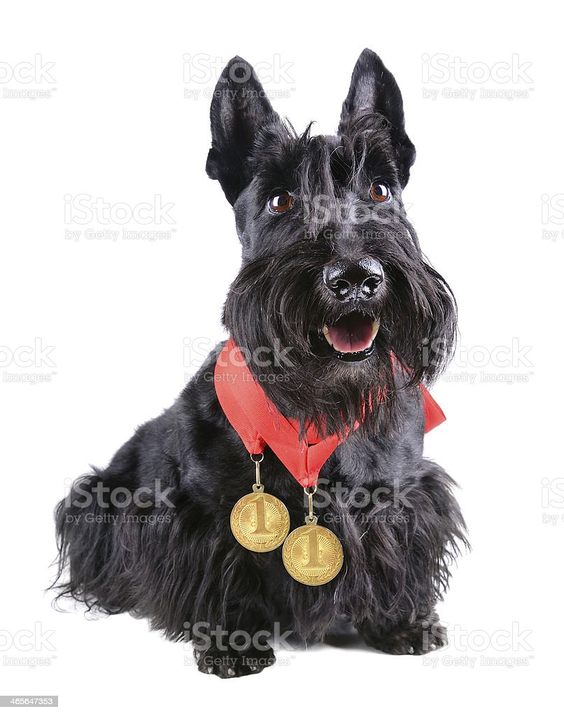 Champion dog stock photo