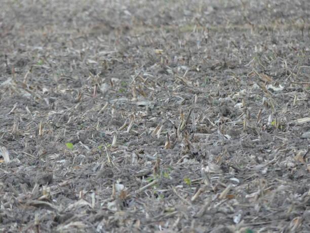 Champs de ruine champs de maïs coupé ruine stock pictures, royalty-free photos & images
