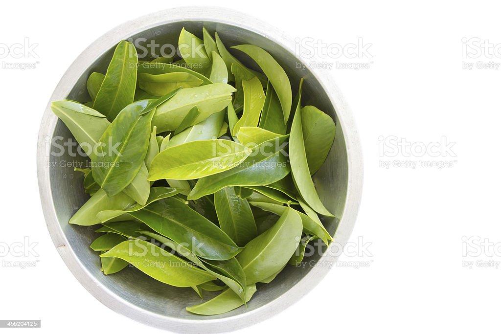 Chamuang leaves (Garcinia Cowa Roxb.), anticancer herbs royalty-free stock photo