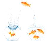 changing fishbowl