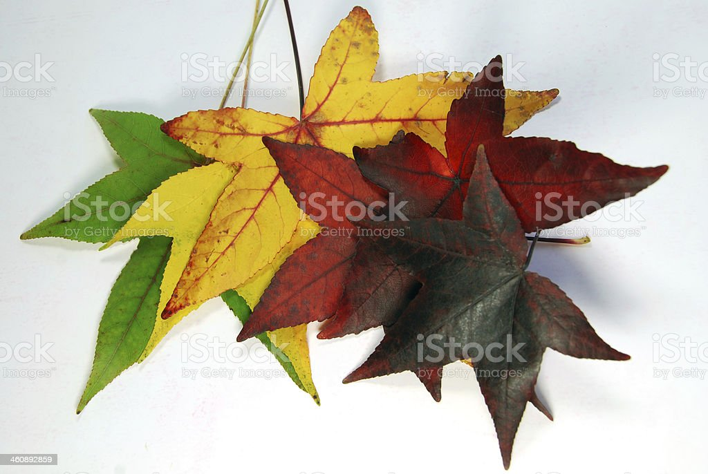 Changing colors stock photo