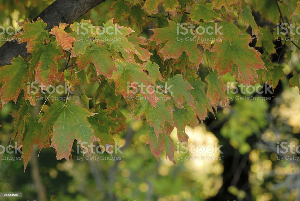 Changing Colors royalty-free stock photo