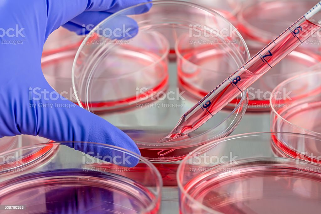 Changing medium of a cell culture dish stock photo