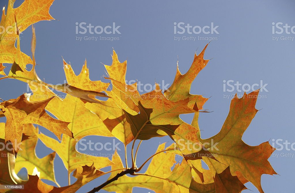 Changing of the Season royalty-free stock photo