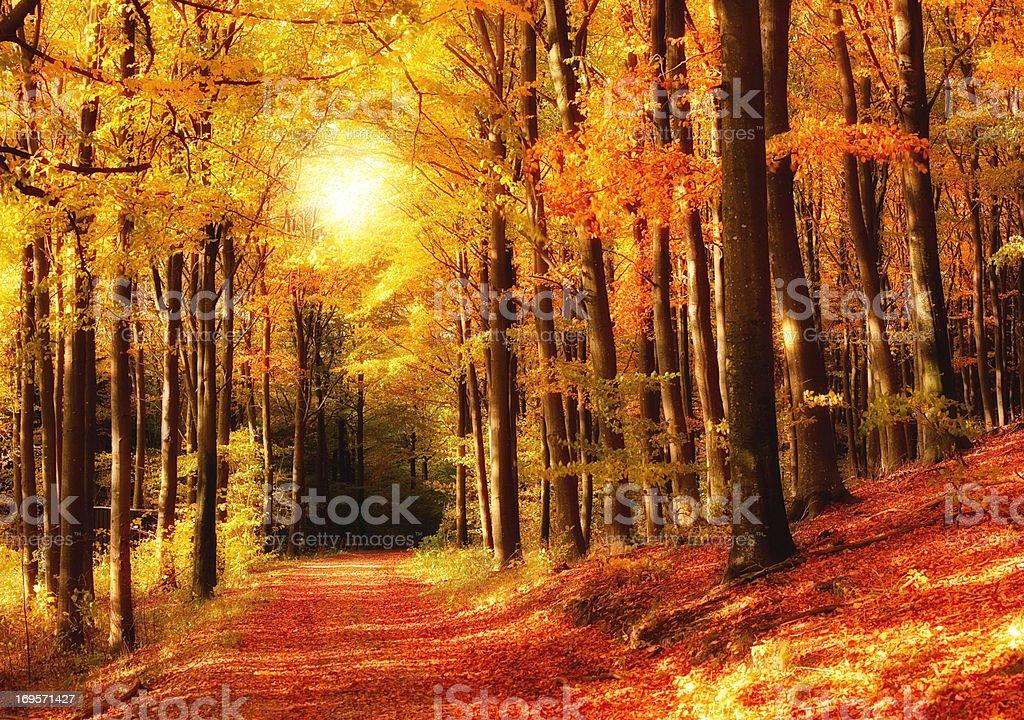 Wechsel der Jahreszeiten – Foto
