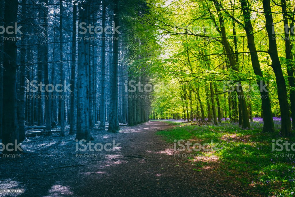 Changing Seasons Of Mysterious Woodland stock photo
