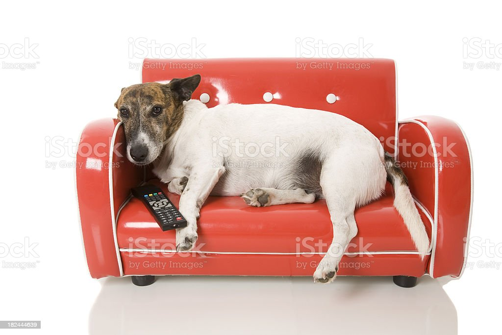 Channel Surfing Dog stock photo