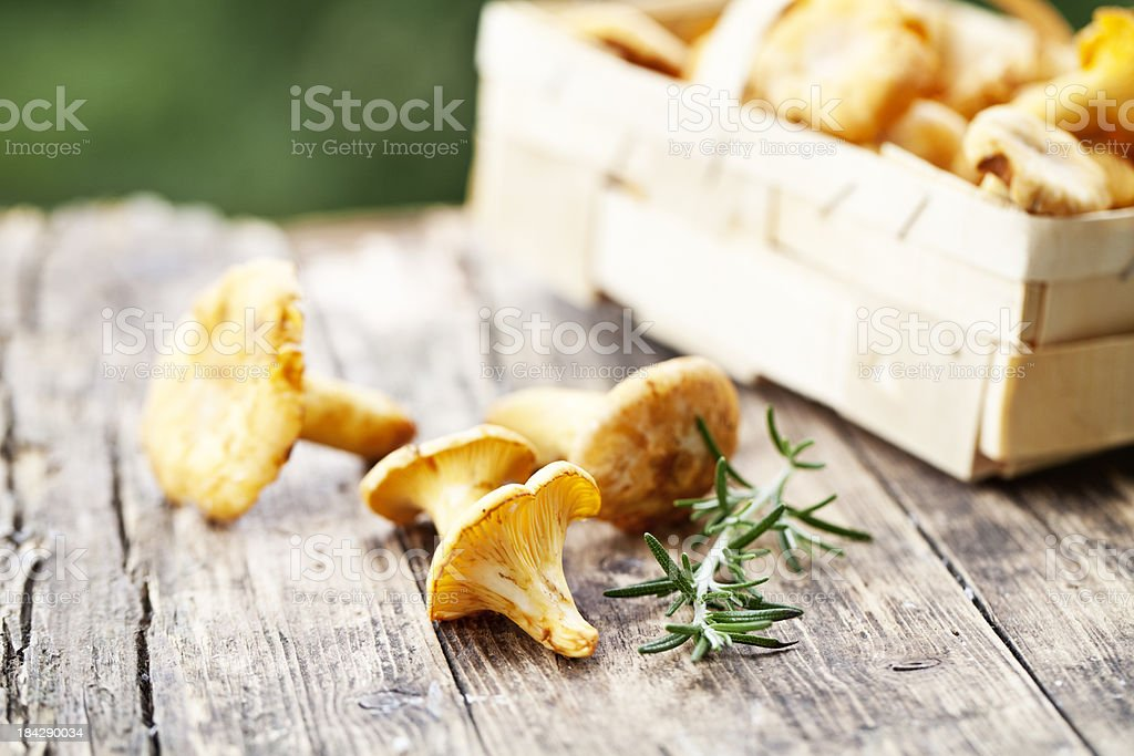 chanterelle and rosemary stock photo