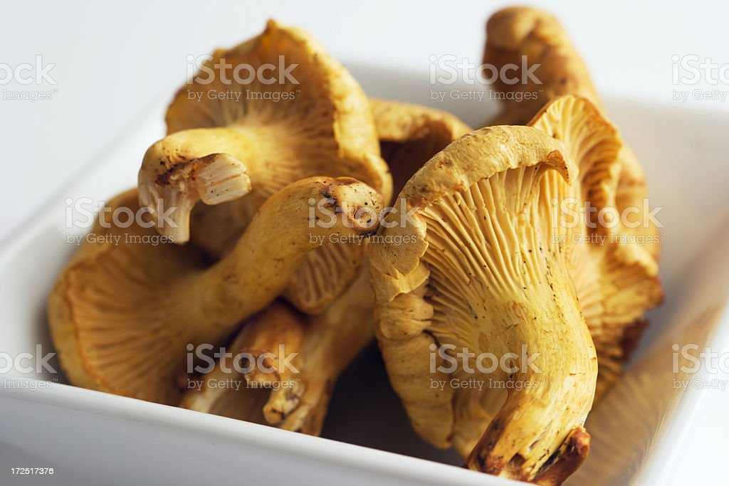 Chanterelle Mushrooms Close-up royalty-free stock photo