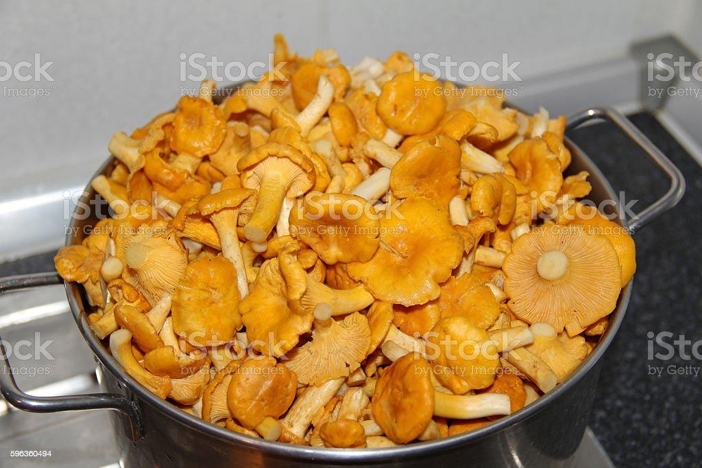 Chanterelle mushrooms royalty-free stock photo