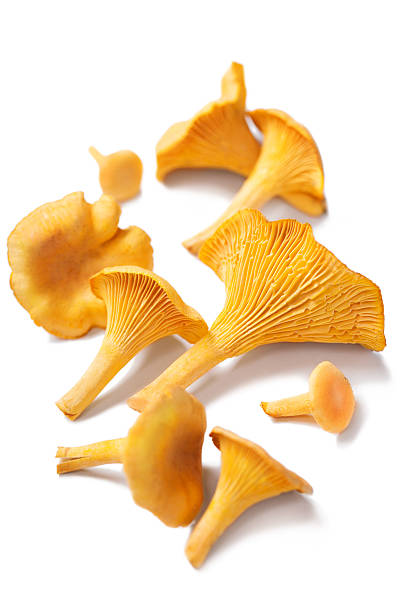 Chanterelles isolated stock photo
