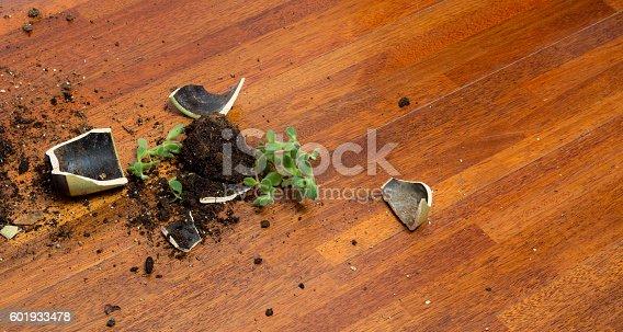 Mature woman with  suede heels walking past a broken flowerpot on the parquet