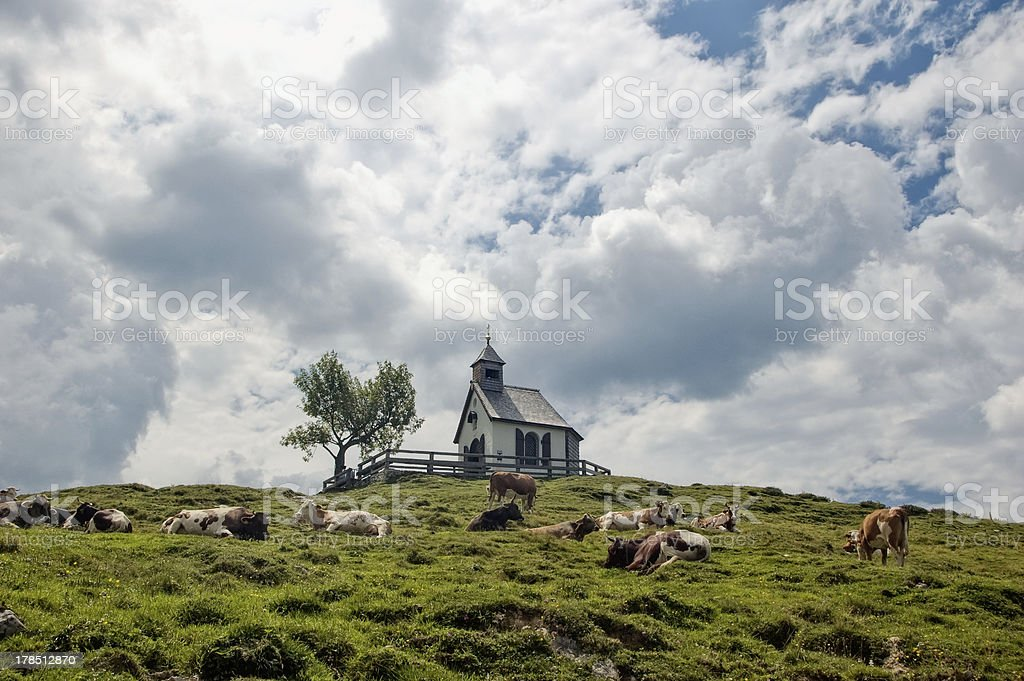 Chapel and Cows royalty-free stock photo