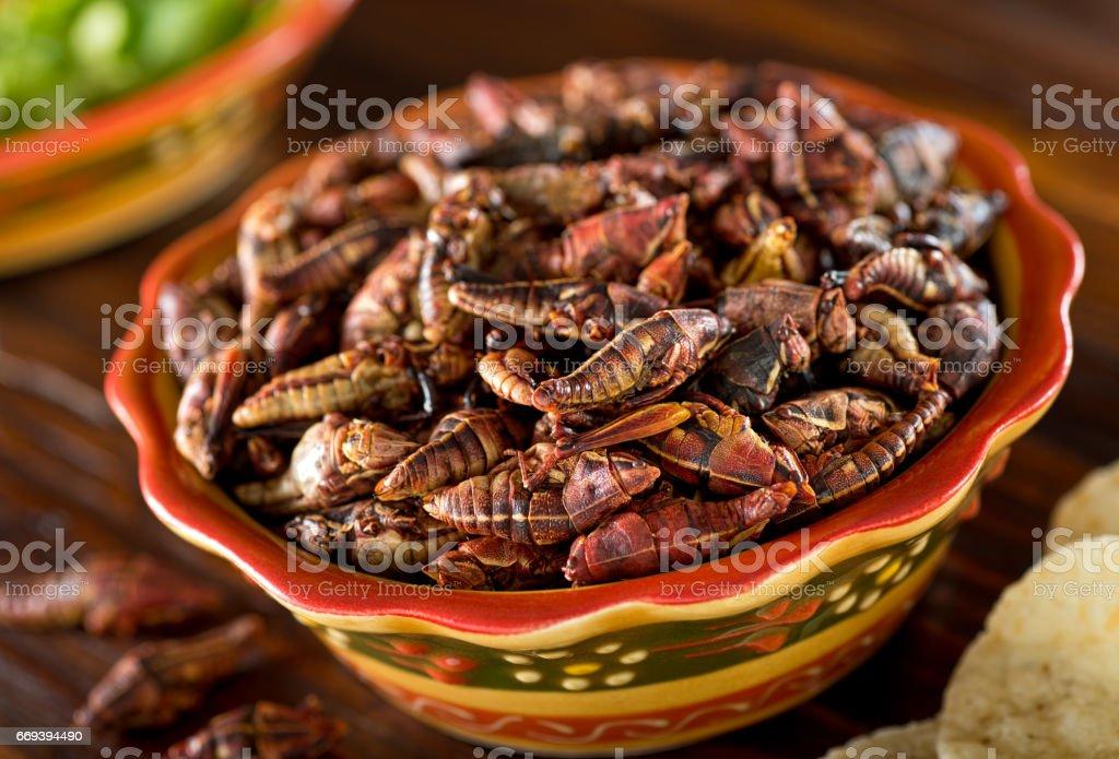 Fotografía De Chapulines Fritos Mexicanos Saltamontes Y
