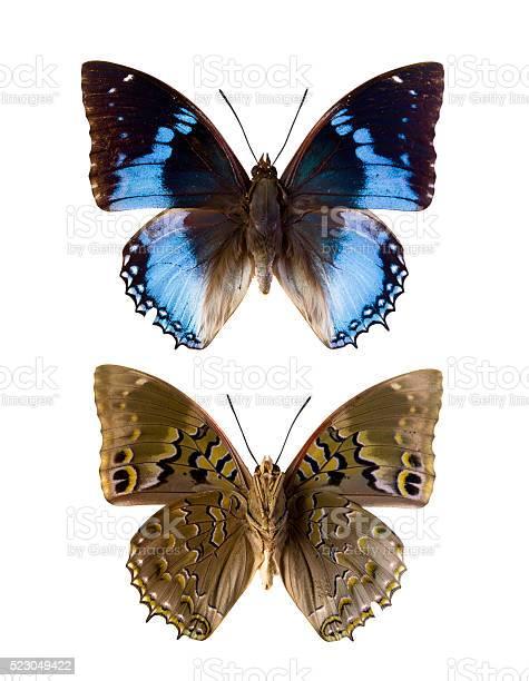 Charaxes smaragdalis picture id523049422?b=1&k=6&m=523049422&s=612x612&h=fyq8s3jmapxwnequjmwfdownnp36ftoaxryeyqgqz1s=