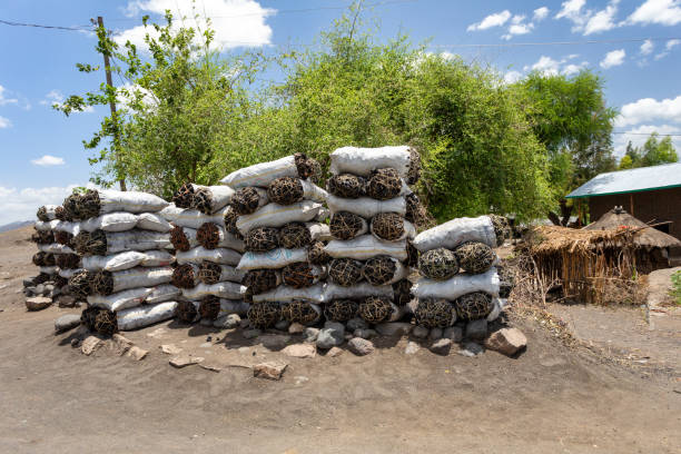 Charcoal for Sale, street of ethiopia stock photo