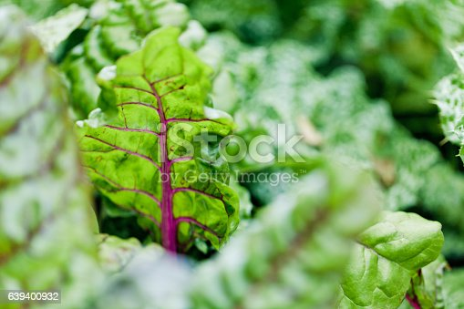 Agriculture in Canada: Chard