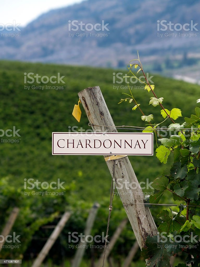 Chardonnay grapevines royalty-free stock photo