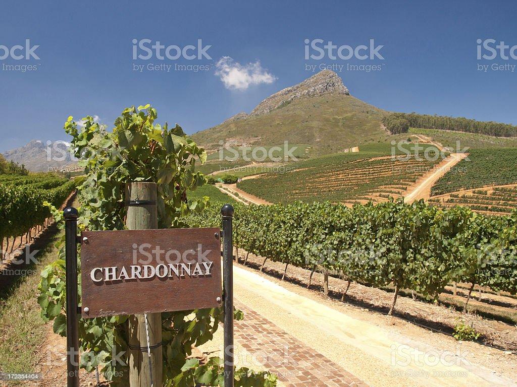 Chardonnay royalty-free stock photo