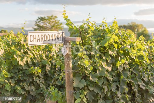 Signpost on row of chardonnay grapevines in vineyard at sunset