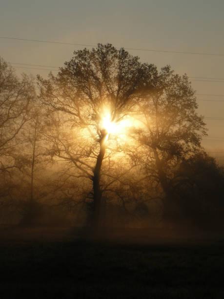 `Charging` sunrise behind the tree stock photo