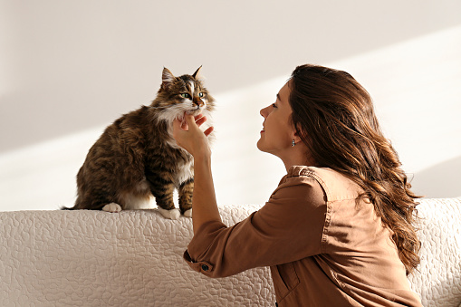 1149249445 istock photo Charismatic young woman playing with her adorable cat. 1205810303
