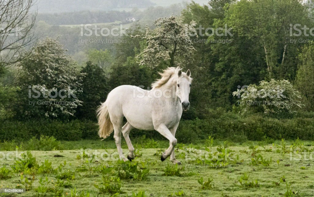 Charlemagne of County Cork stock photo